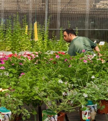 Los empleados de Sempre Verd se han especializado en el sector de las plantas y la jardinería FOTO Carlos Sendra (Sendra Fotografía)