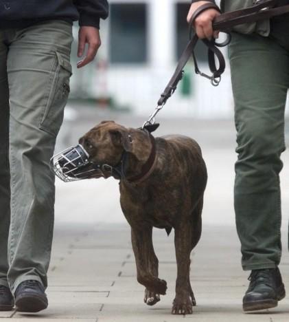 La Policía de Marratxí extremará la vigilancia para el cumplimiento de la ordenanza de animales