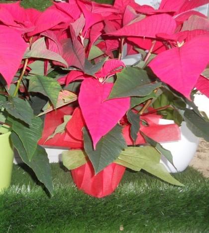 Los productos típicos navideños ya están en Sempre Verd