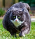 gatos-obesos-1-848x477x80xX