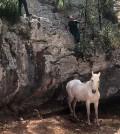 rescate-caballo-(2)