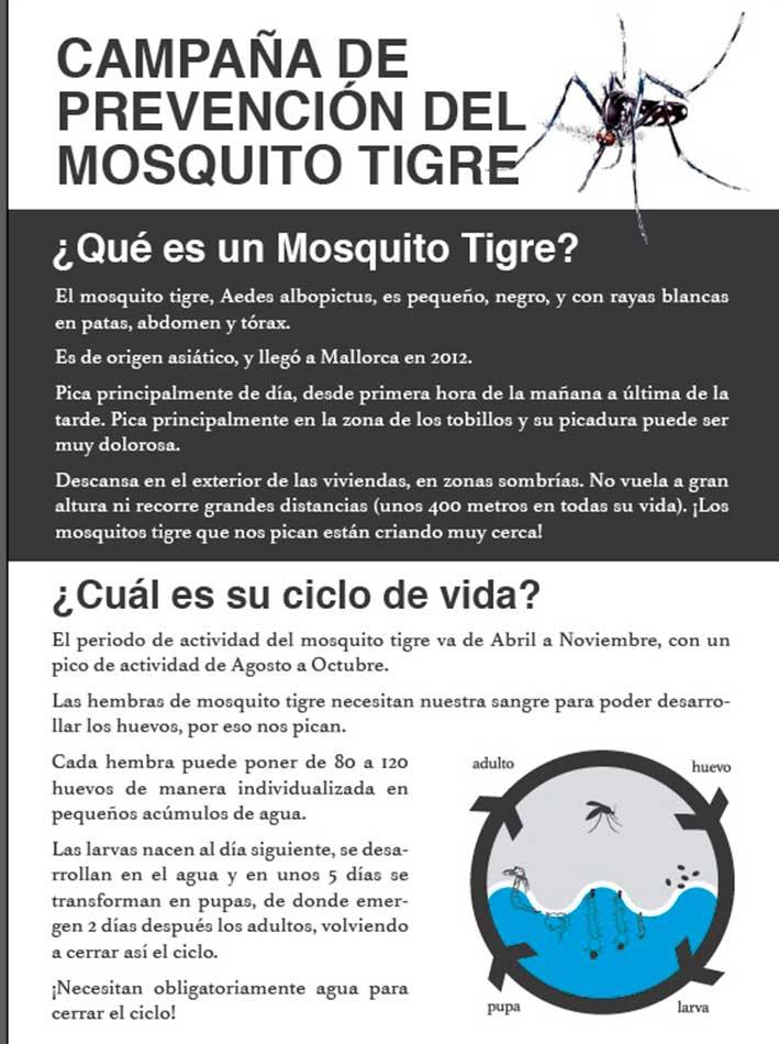 Moscard-tigre-1