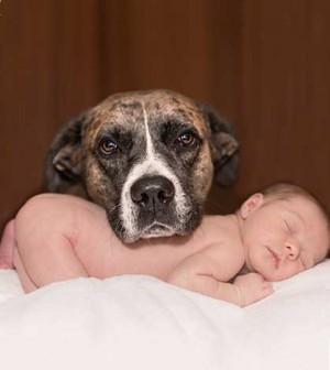 perros-niños-1