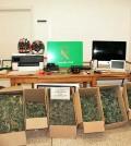 marihuana-pont-dinca-(1)