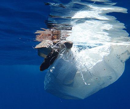Contaminación-en-el-mar