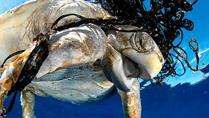 tortuga-contaminación-en-el-mar