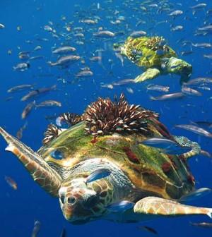 tortuga-marina-1