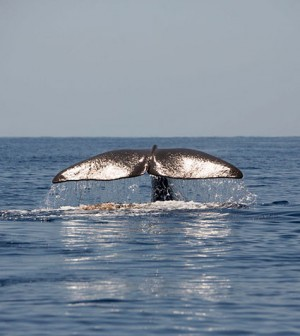 Ballena-Save-The-Med-5